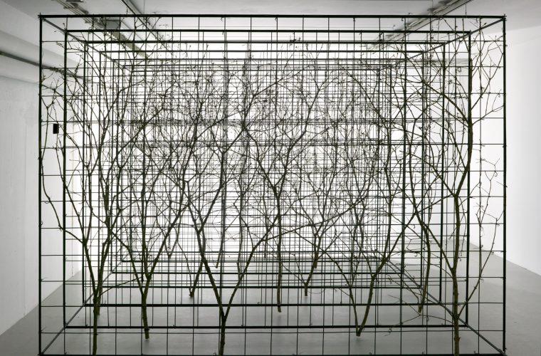 Grid Garden, 2017
