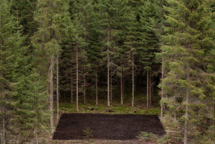 Forest Square II, 2009, 70 x 105 cm, C-print, Diasec