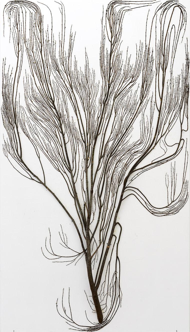 2D Tree, 2017 – Antti Laitinen